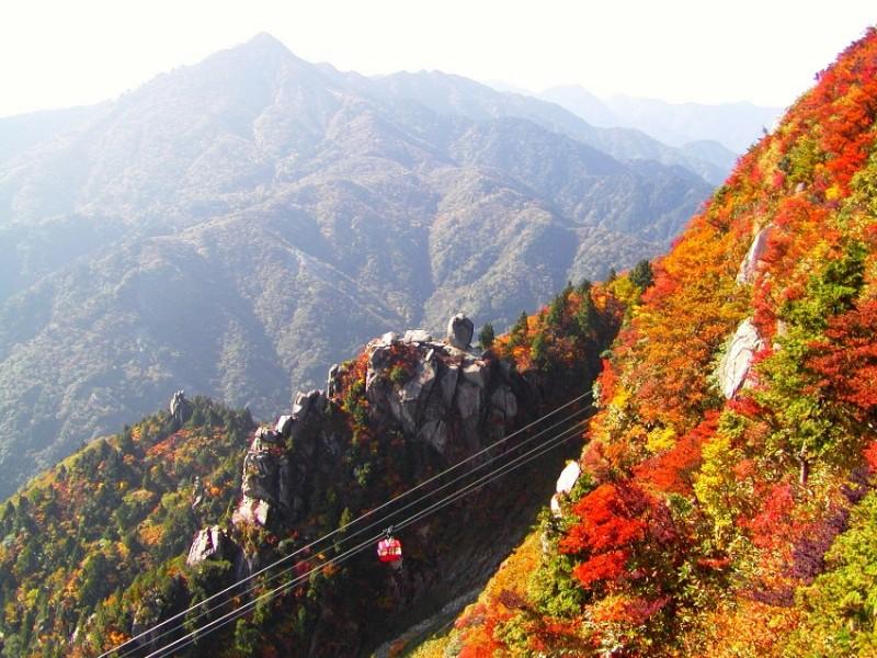 autumn_top
